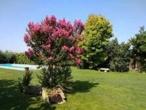 jardí amb piscina casa rural